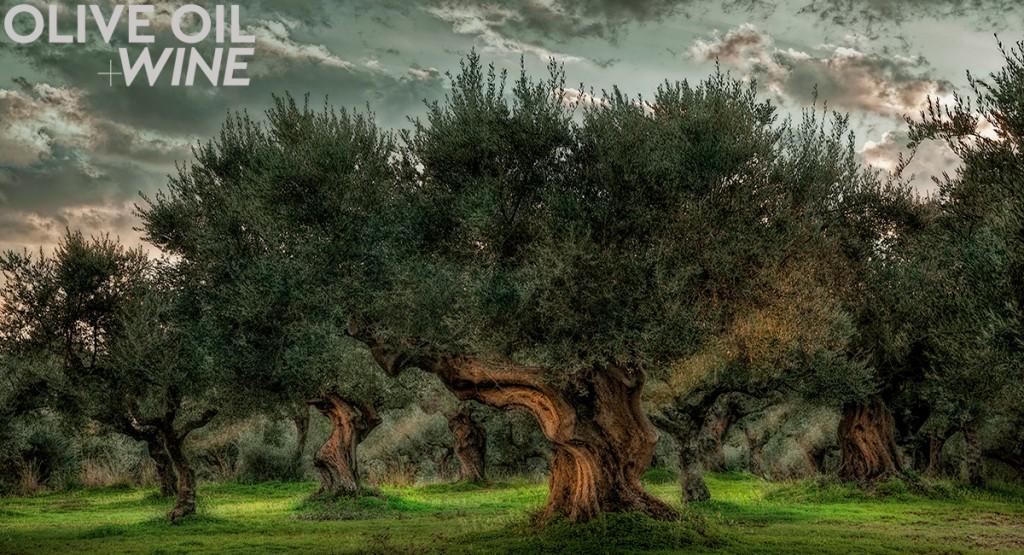 Olives&GrapesPHOTO1