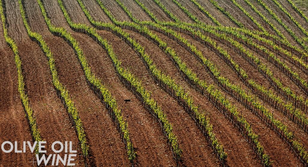 Olives&GrapesPHOTO3